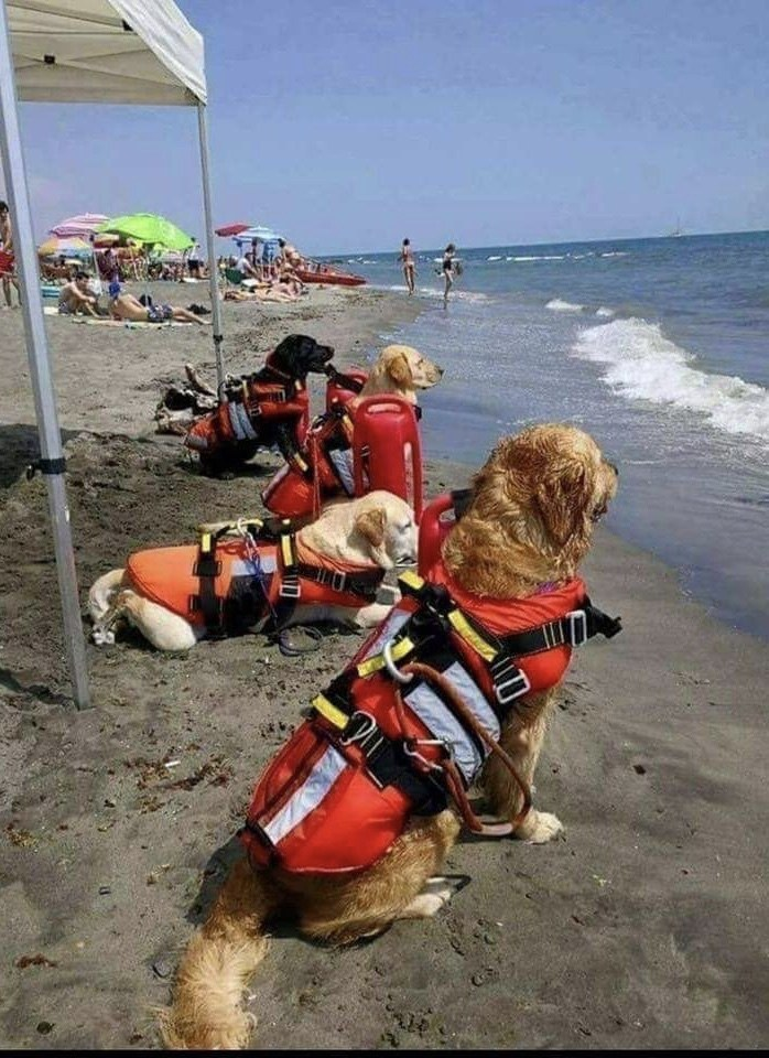 Dogs help the lifeguards