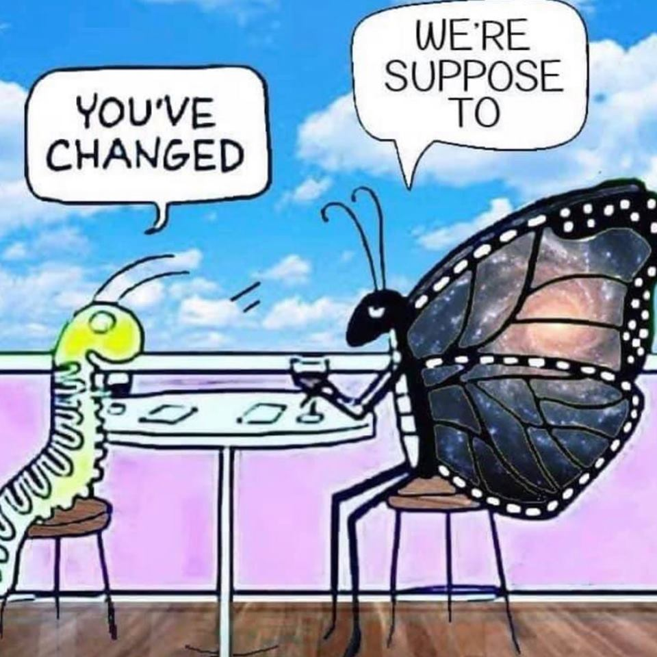 You've changed, said the caterpillar