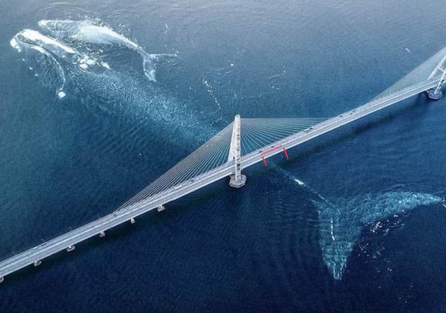 Fake whale photo