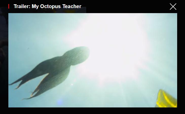 Octopus Teacher screen grab