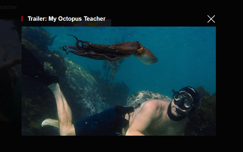 Film with Octopus