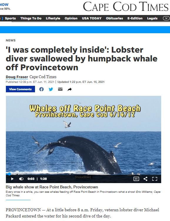 Cape Cod Times splash of whale