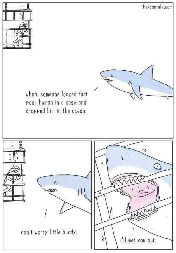 Shark sees human in cage and helps